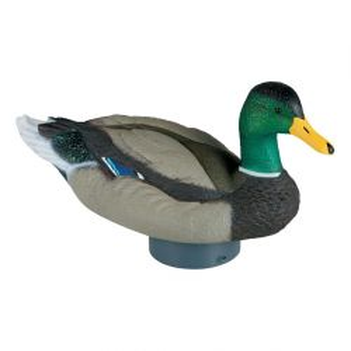 Quiver Duck Hd   Dwo