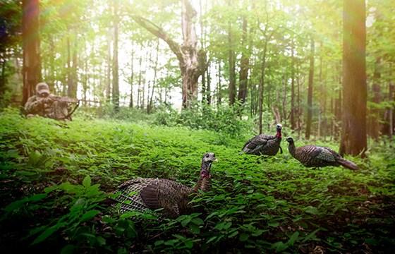 Spring Turkey